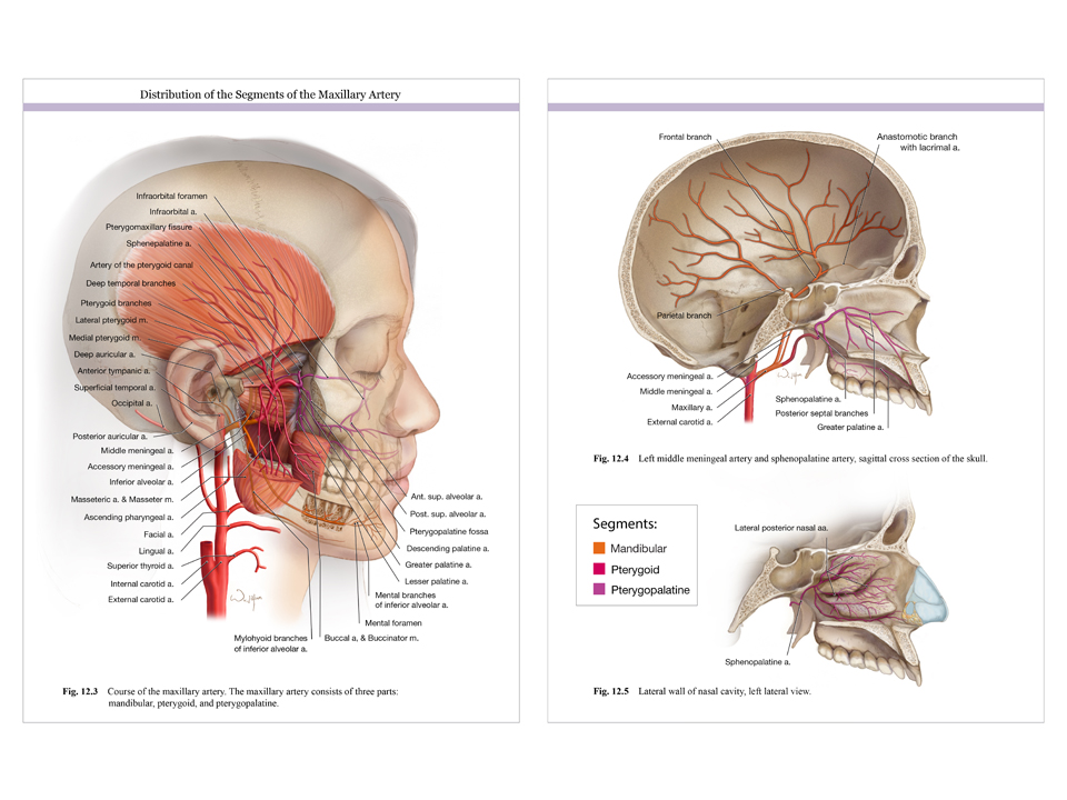 2014 Salon Winners Association Of Medical Illustrators
