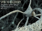 SPIN TO RECOVERY: 3D-Printed Spider Silk in Nerve Regeneration