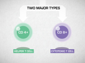 Introduction to T cells