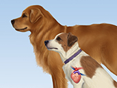 Understanding Heartworm Disease & Treatment: A Veterinary Guide