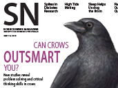 Can Crows Outsmart You?