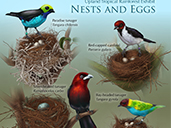 Nests and Eggs of the Tropical Rainforest