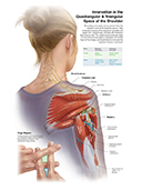 Innervation of the Quadrangular Space