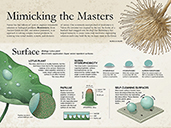 Biomimicry: Mimicking the Masters